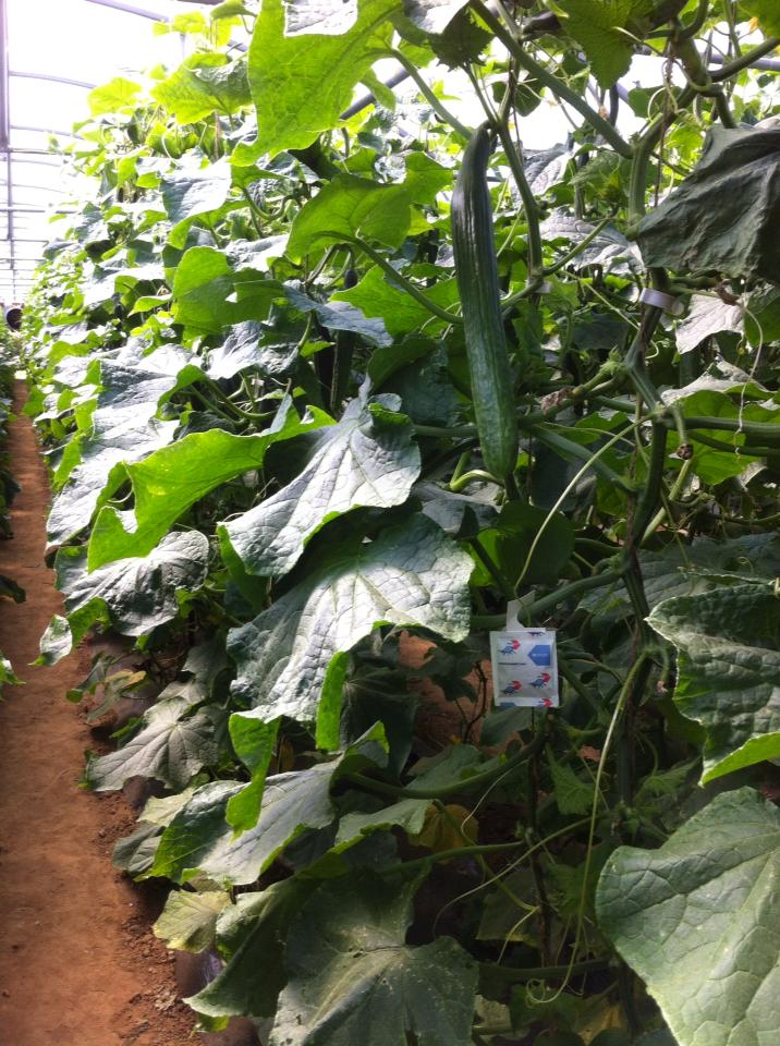 agriculture responsable les jardins d 39 imbermais. Black Bedroom Furniture Sets. Home Design Ideas